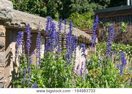 Lavender, Purple Flowers With Stone Staircase On The Background
