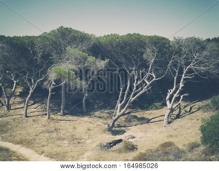 Atmospheric Photo Portuguese nature. Large scorched trees