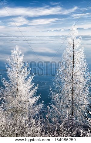 Frost on tree and lake Liptovska Mara Slovakia covered in ice. Mountains and blue sky