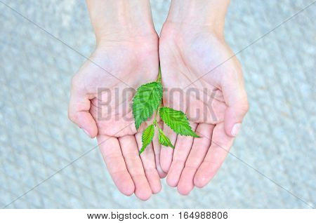 Young plant in hand against grey concrete background