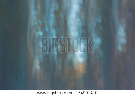Abstract Forest Photo