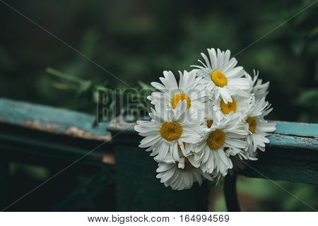 Beautiful bouquet of daisies lying on the fence
