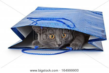 Kitten peeking out of a gift package