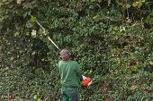 Professional hedges cutting with gasoline telescopic hedge trimmer. poster