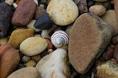 A lone spiral shell amongst many pebbles poster