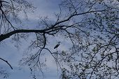 A crane on a tree limb above the Tennessee river. poster