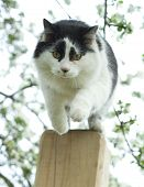 Cat in the aplle garden jumping from high column poster
