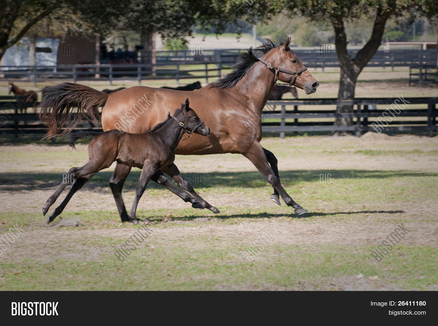 Beautiful Mother Baby Image Photo Free Trial Bigstock