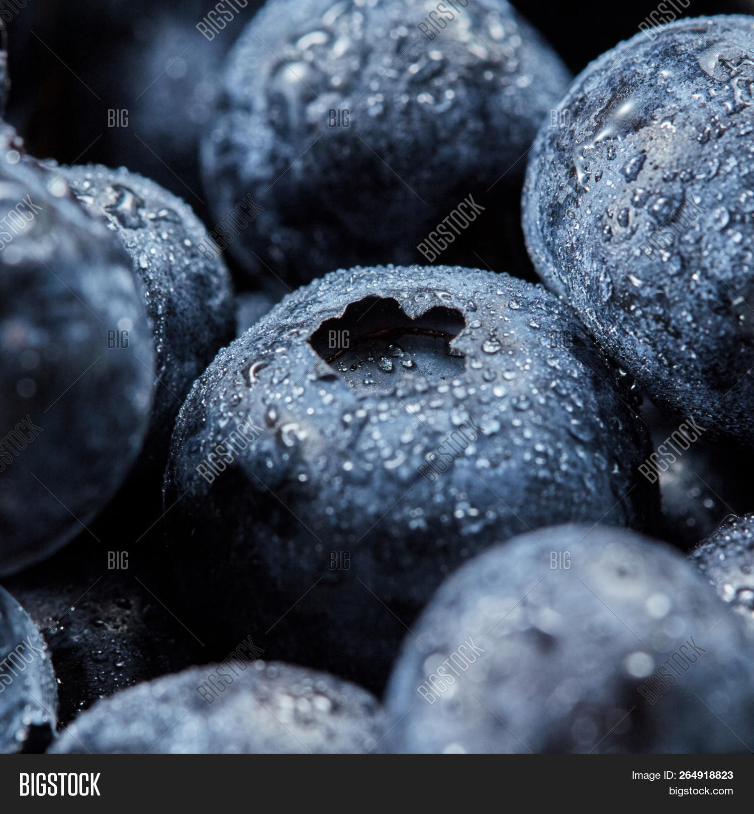 Blueberries Background Image & Photo (Free Trial) | Bigstock