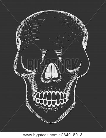 Human Skull. Hand Drawn Vector Illustration Of Human Human Skull. Hand-drawn Human Skull On A Black