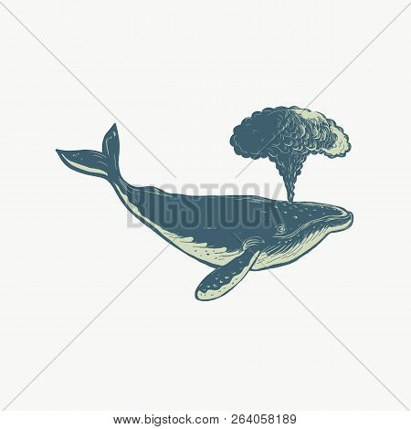 Scratchboard Style Illustration Of A Humpback Whale Blowing Water Thru Blowhole Done On Scraperboard
