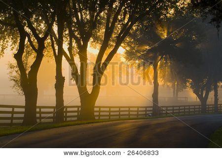 Brilliant sun light with fog 34