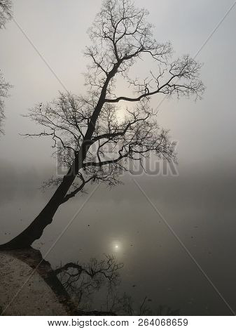 Vertical Shot Of Picturesque Silhouette Of A Single Tree, Reflection On Lake Water At Sunrise. Black