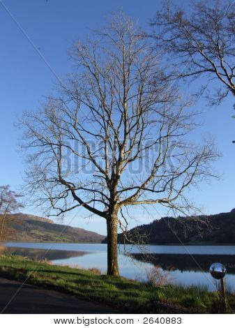 Tree And Lake Ireland