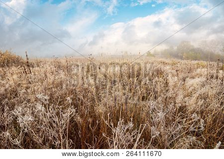 Field With Frozen Dry Grass. Distant Forest In Fog Under The Gorgeous Sky