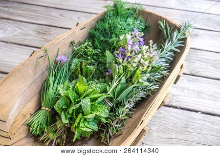 Herbs Fresh From Kitchen Garden In Harvest Basket: Chives, Mint, Thyme, Rosemary, Dill, Sage With Ed