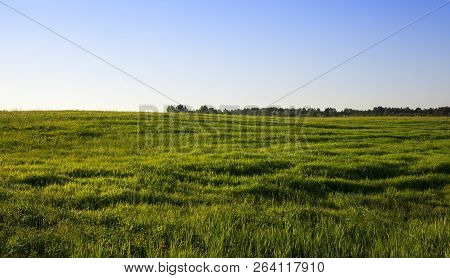 Landscape In Summer With Green Vegetation Grass, Which Is Used As A Pasture For Livestock On The Far