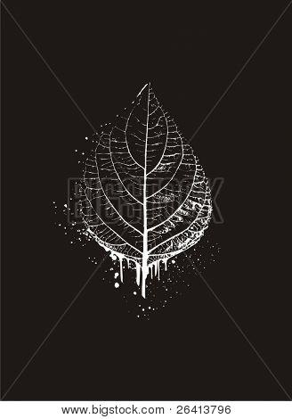 leaf on grunge background