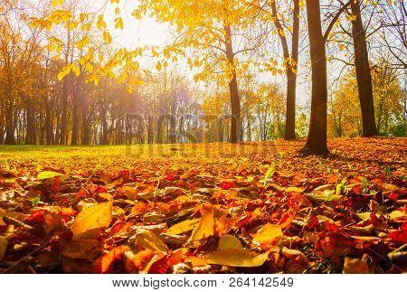 Autumn trees in sunny autumn park lit by sunshine - sunny autumn landscape in bright sunlight. Autumn park sunny scene, fallen autumn leaves on the ground