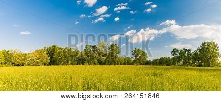 Panorama Summer Flower Meadow In The Mountains, Tourism. Beautiful Nature View Landscape. Fresh Gree