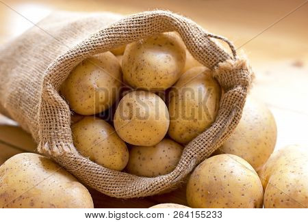 Fresh Raw Potatoes In A Burlap Sack. Earthy Potato Scene With Sackcloth, Arrangement On A Wooden Bac