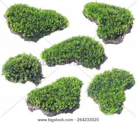 Green Moss Isolated On White Background Close Up..