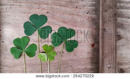Clover, Trefoil, Shamrock Green Leaves On Old Wooden Surface. Irish Day Saint Patricks