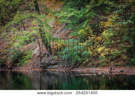 Shore Of The Lake, Green And Yellow Leaves Above The Water