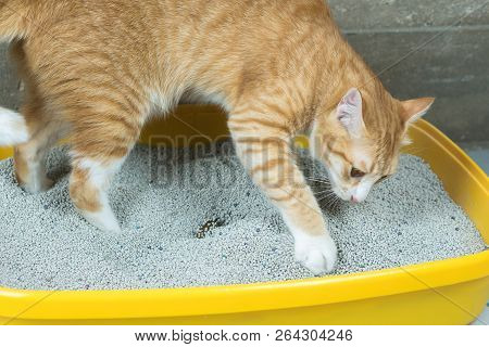 The Orange Cat Excreted The Sandbox And The Neatly Arranged.