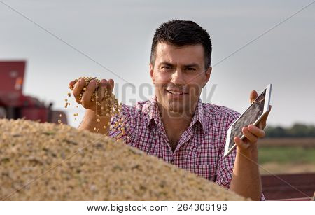 Farmer Holding Soybean Grains In Hand