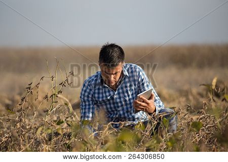 Satisfied Handsome Farmer With Tablet Squatting In Ripe Soybean Field Before Harvest