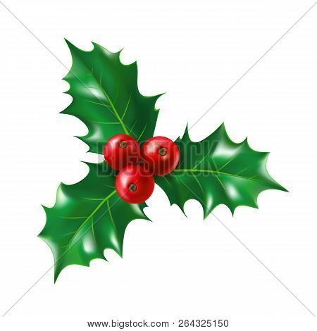Isolated Holly Berry With Leaves. Ilex Berries On Sprig With Leaf. Plant For New Year And Merry Chri
