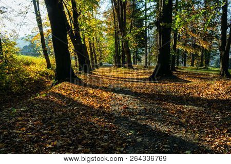 Sunbeams Pouring Into A Slightly Blurred Autumn Forest Creating A Mystical Ambiance