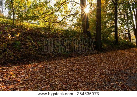Beautiful Landscape Of A Fresh Evergreen Forest, Abstract Natural Background, Great Coniferous Trees