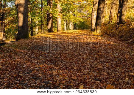 Summer Nature. Sunlight In Trees Of Autumn Forest