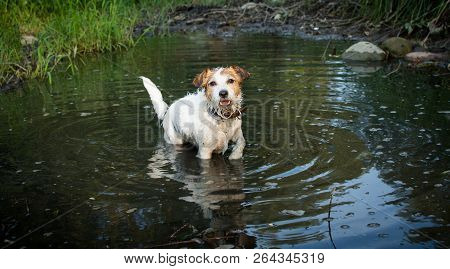 Dirty Dog Playing Inside Of A Disgusting Mud Puddle