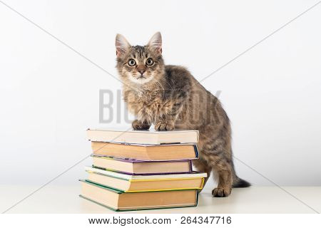 Cute Little Kitten With Books On White Background