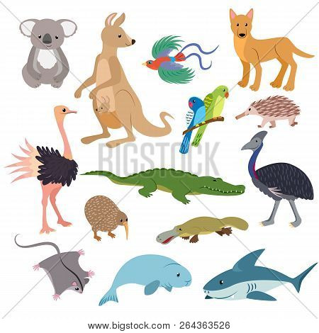 Australian Animals Vector Animalistic Character In Wildlife Australia Kangaroo Koala And Shark Illus
