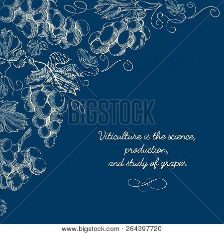 Natural Viticulture Hand Drawn Template With Twigs Of Grapes And Inscription On Blue Background Vect