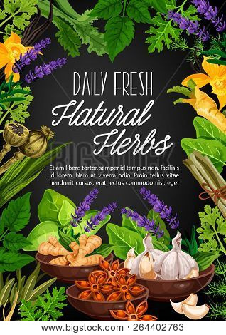 Natural Herbs And Organic Seasonings For Cooking. Vector Poppy Seeds, Ginger Root Or Horseradish And