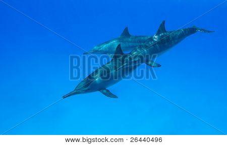 Dolphin Family