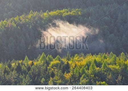 Green Mountain Forest Landscape. Misty Mountain Forest. Fantastic Forest Landscape. Mountain Forest