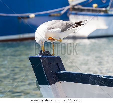 The Seagull On The Prow On The Water