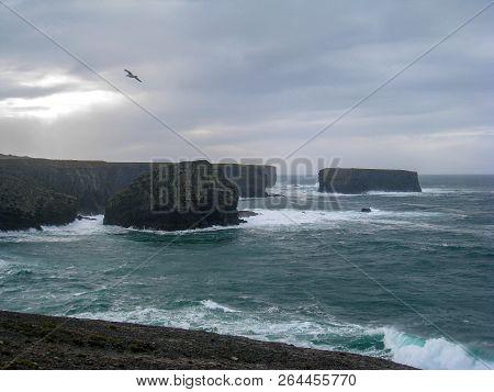 Wild Birds In Wild Weather, Wild Atlantic Way, Ireland
