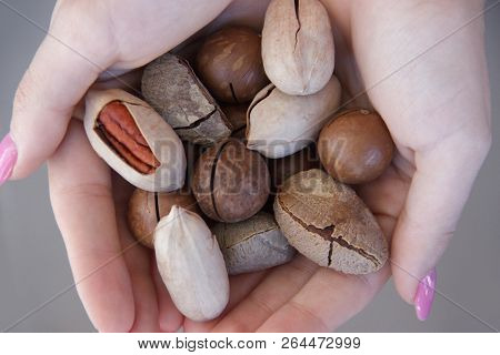 Macadamia, Brazil Nuts, Bertholletia, Pecan On Hand. Woman Hands Holding Roasted And Notched Exotic