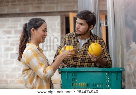Gardener Man And Gardener Woman Working In  Recruited Melon Gardening; Greenhouse Produce, Food Prod