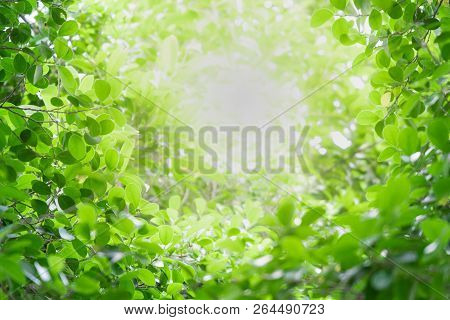 Close Up Beautiful Natural View Green Leaves With Sunlight On Greenery Blurred And Bokeh Wallpaper B