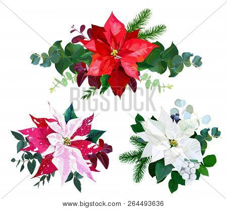 Christmas Bouquets Arranged From Red And White Poinsettia, Fir Branch, Emerald Eucalyptus Selection,