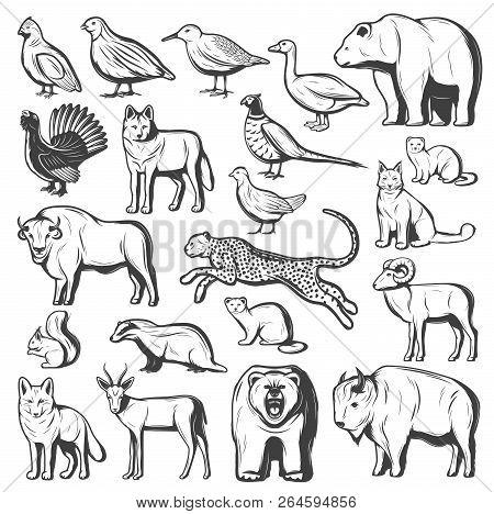 Wild Animals And Birds, Hunting Sport. Vector Monochrome Bear, Wolf And Cheetah, Buffalo, Lynx And B