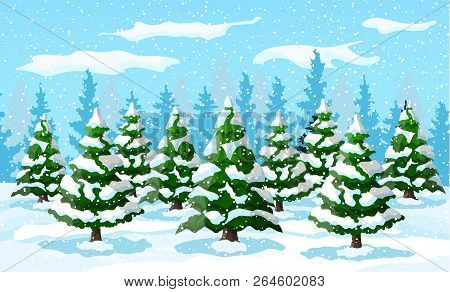 Winter Landscape With White Pine Trees On Snow Hill. Christmas Landscape With Fir Trees Forest And S